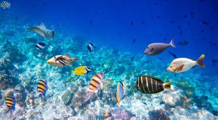 vissen zee duikvakanties voor singles